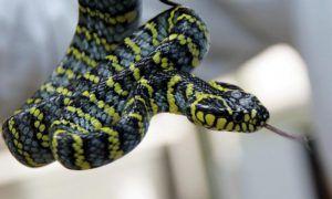 Москвичи чаще всего из экзотических животных выбрасывают змей, игуан и попугаев. Фото: Сергей Шахиджанян, «Вечерняя Москва»