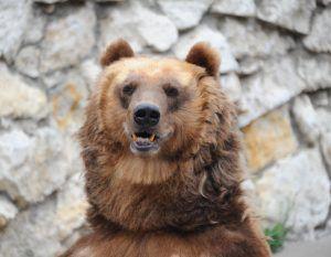 Медведи впали в спячку в Московском зоопарке. Фото: Светлана Колоскова, «Вечерняя Москва»