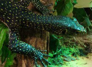 Синехвостые вараны появились в Московском зоопарке. Фото: сайт мэра Москвы