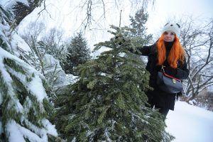 Пункты приема елок на переработку открылись в Москве.Фото: архив, «Вечерняя Москва»