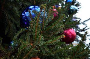 Жители района смогут сдать новогоднюю елку в специальный пункт приема. Фото: Анна Быкова