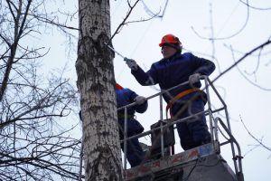 Представители «Жилищника» завершили реализацию программы по кронированию тополей в районе. Фото: Денис Кондратьев