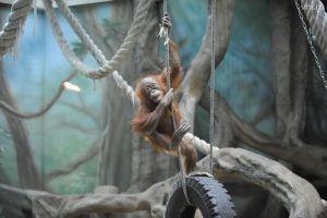 Несколько павильонов Московского зоопарка ужесточили меры безопасности. Фото: Александр Казаков, «Вечерняя Москва»