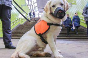 Москвичам посоветовали соблюдать меры гигиены при обращении с домашними животными в условиях коронавируса. Фото: сайт мэра Москвы