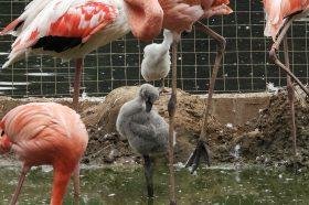 Фламинго обзавелись потомством в Московском зоопарке. Фото: сайт мэра Москвы