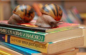 Сотрудники Зоологического музея проведут онлайн-лекцию. Фото: Наталия Нечаева, «Вечерняя Москва»