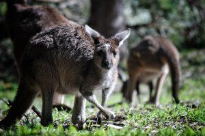 Лекцию об Австралии расскажут на сайте Зоологического музея. Фото: pixabay.com
