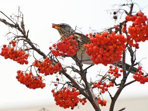 Работники Зоологического музея покажут фильм о птицах на канале учреждения. Фото: Александр Орлов, «Вечерняя Москва»