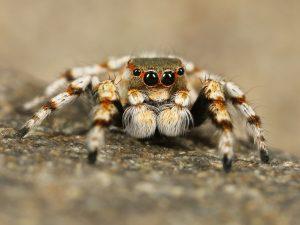 Работники Зоологического музея проведут лекцию о пауках в онлайн-формате. Фото: pixabay.com