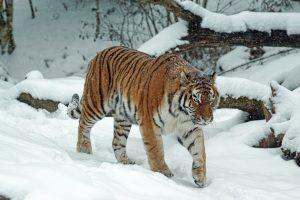 Сотрудники Биологического музея проведут онлайн-лекцию о животных в зимнее время года. Фото: pixabay.com