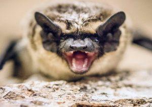 Видеоролик о летучих мышах опубликовал Биологический музей. Фото: сайт мэра Москвы