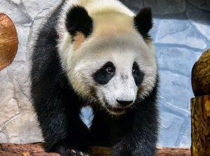 Видеоролик опубликовали сотрудники Московского зоопарка. Фото: сайт мэра Москвы