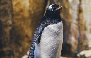 Пингвины Московского зоопарка помешали уборке вольера. Фото: pixabay.com