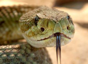 Сотрудники Зоомузея провели онлайн-лекцию о ядовитых животных. Фото: pixabay.com