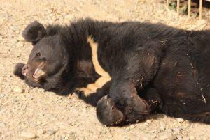 Медведи в Московском зоопарке вышли из спячки. Фото: pixabay.com
