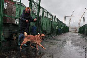 Порядка 17 тысяч животных ждут своих хозяев в приютах Москвы. Фото: Пелагия Замятина, «Вечерняя Москва»