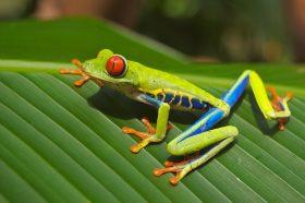 День лягушки организовали в Зоомузее. Фото: pixabay.com