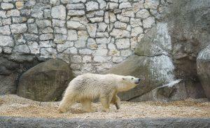 Конкурс на выбор имени белому медвежонку Московского зоопарка начался. Фото: сайт мэра Москвы
