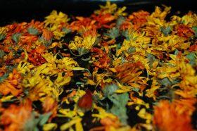 Сотрудники Биомузея рассказали о коллекции гербарного материала