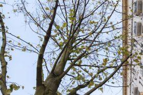 Около двух тысяч деревьев высадят в районе. Фото: сайт мэра Москвы