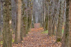 Биомузей проведет занятие про осенний лес. Фото: Анна Быкова